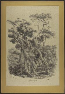 Arbres des forêts