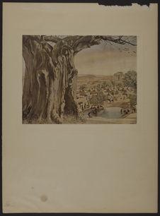 Un baobab (Soudan) - Pl. 19