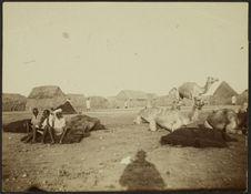 Arrêt des chameaux à l'entrée de Djibouti
