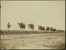 Caravane du Prince d'Orléans. Djibouti