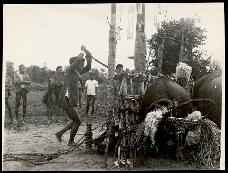 Maang-Ddôong mettant à mort le buffle