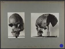 Tonkin : collection Mansuy - Crâne de Lang Cuom n°7