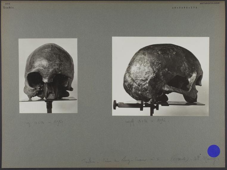 Tonkin : collection Mansuy - Crâne de Lang Cuom n°I