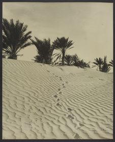 Sans titre [Vue d'une dune]
