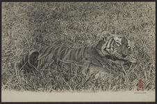 Tigre tué dans la jungle
