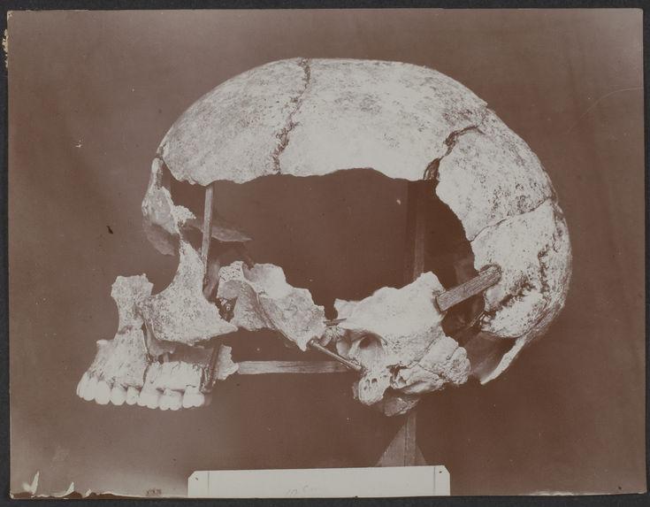 Crâne