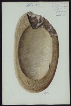 Antiquités Caraïbes. Collection L. Guesde. Pointe à Pitre. Guadeloupe. Mortier...