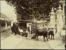 Madère [deux traineaux tirés par des bovins devant une grille de propriété]