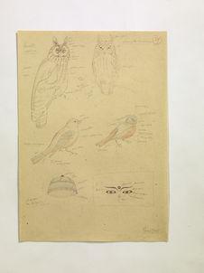 Chouettes Amérique. Oiseaux Amérique. Chapeau de Népal. (39)
