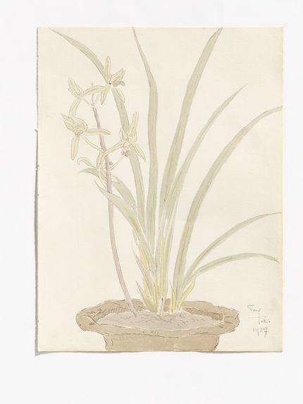 Cymbidium, in the flowerpot  [Cymbidium dans un pot de fleur]