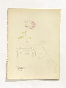 Morning glory in the flowerpot [volubilis ou liseron dans un pot de fleur]