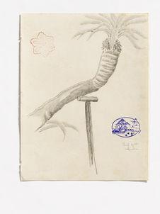 Palm tree  [palmier]