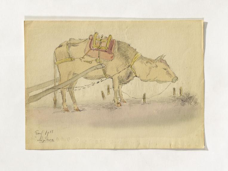 Vache tirant une charrette