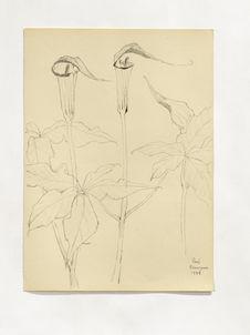Fleurs de Karuizawa