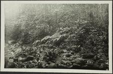 Mayombe : rivière sèche