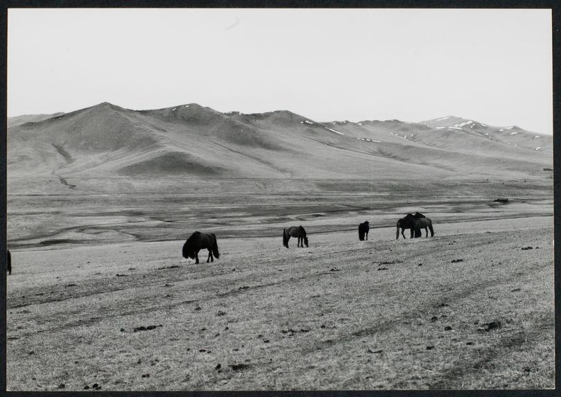 Steppe de Mongolie