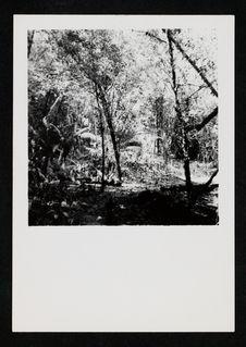 Sans titre [forêt]