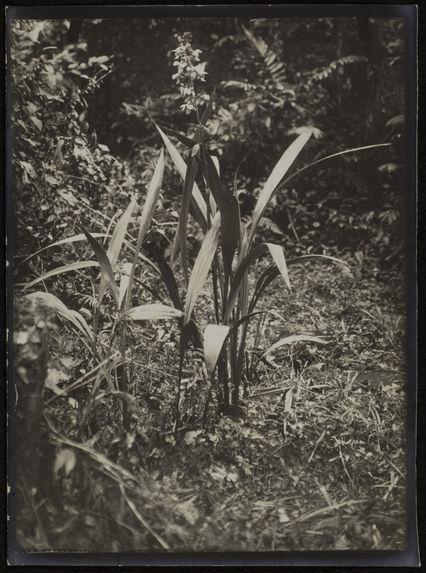 Sans titre [plante]