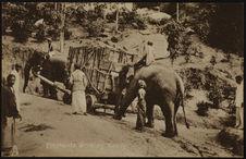 Elephants working