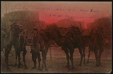 Les chameaux de la place Sultan Mehmed