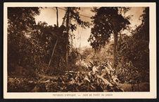 Paysage d'Afrique - coin de forêt du Gabon