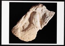 Cheval broutant, fragment de sculpture pariétale