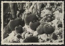 Sans titre [des cactus]