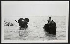 Moulmein, elefanti al bagno