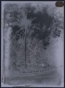Vue du jardin botanique à Brisbane