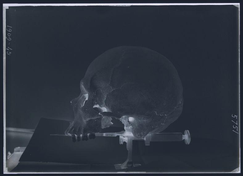 Crâne du Yucatan