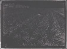 Plantation d'ananas à Duc Hoa