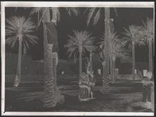 Enfants plaçant des cordes entre les palmiers