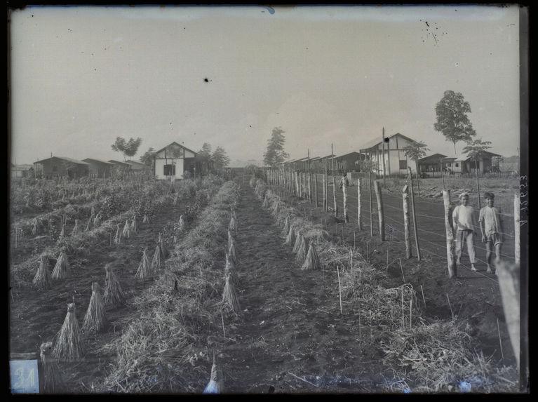 Sans titre [champ agricole]