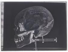 Crâne de la Caste des Poulayer de Maliatur (Malabar), profil