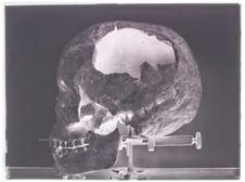 Crâne de Lang Cuom (profil gauche)