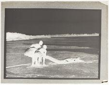 Fort-Lamy. Capture d'un crocodile sur le Chari
