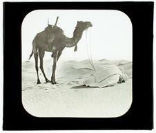 Touggourth. Arabe priant au désert