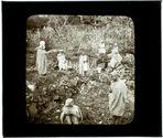 Kabylie. Jardin fruitier