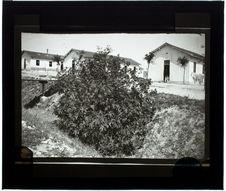 Un ricin (Camp Servière)