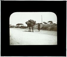 Tunisie. Nabeul. Vers Dar Chabanne
