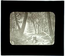 Forêt houillère