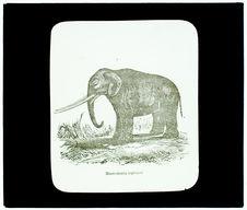 Mastodonte géant restauré à quatre défenses