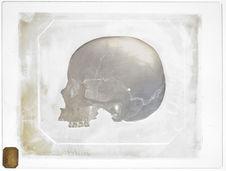 Asie : Crâne d'Hindou, donné par M. Eydoux, Dramond's Harbour, voyage de la...
