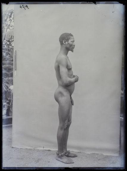 Hottentot, homme, profil