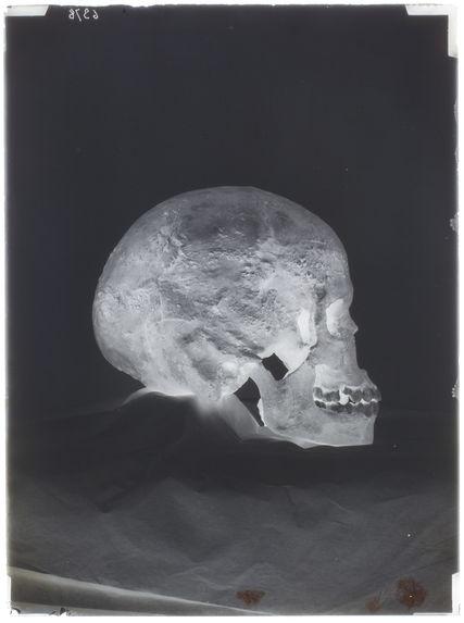 Crâne de Grimaldi