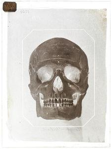 Océanie : Crâne de Maffy Tonga-Taboa (n°1789) face
