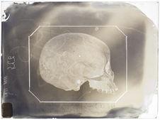Afrique : Crâne de négresse du Sahara (n°225) pr