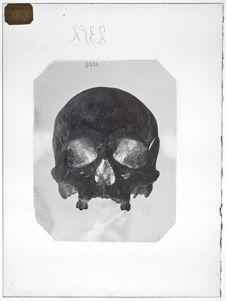 Asie : Crâne d'Hindou mishnoi