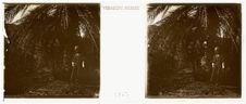 N. Tchoubar Tan Afilla. Palmier de la source