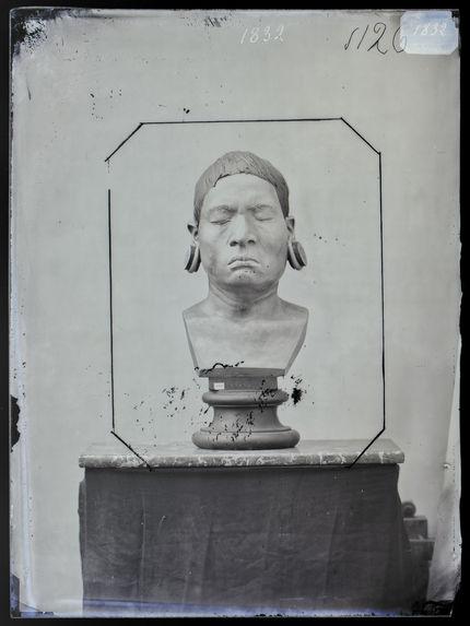 Buste : Botocudo ; sur le buste qui figure dans la collection Anthropologique du Muséum, on a reproduit la botoque à la lèvre inférieure. Buste n°1126. Face